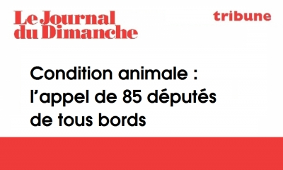 Condition animale : l'appel de 85 députés de tous bords